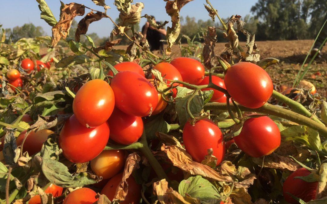 El proyecto LIFE AgriAdapt ofrece a los agricultores y ganaderos herramientas para combatir el cambio climático