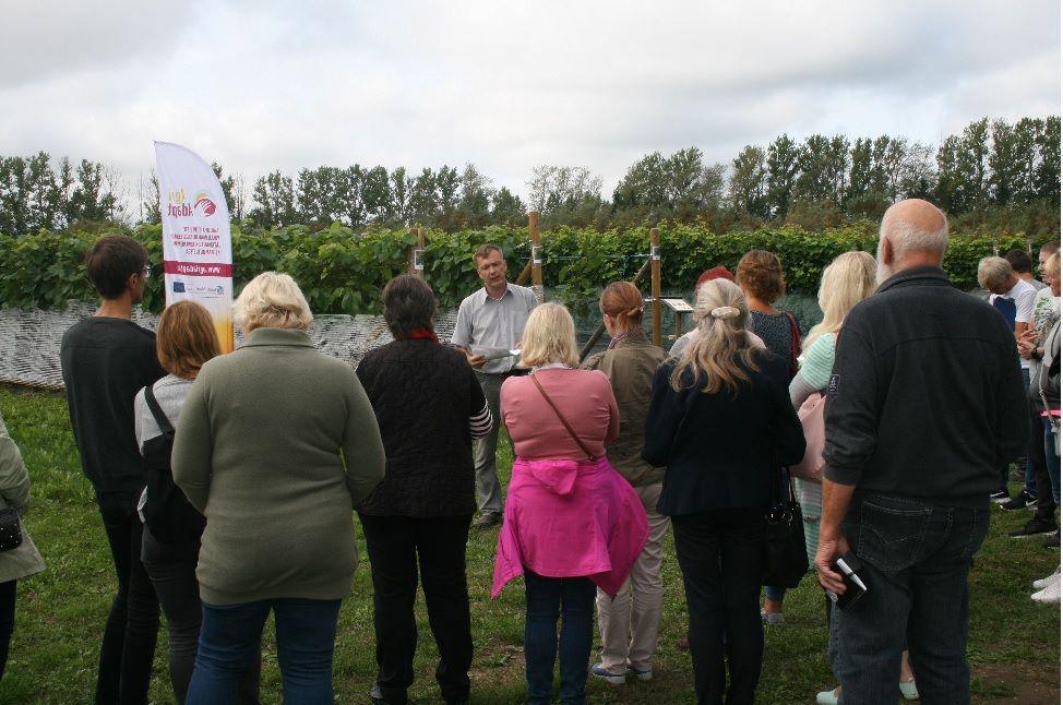 Kann Estland ein Weinanbaugebiet werden?
